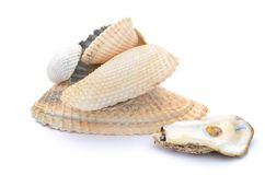 Natural seashells Stock Photo