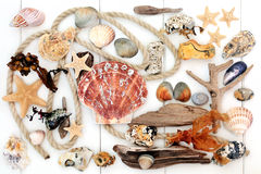 Natural Seaside Objects Royalty Free Stock Photo