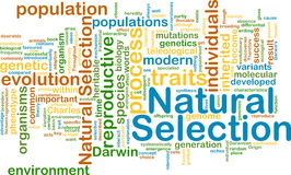 Natural selection wordcloud concept illustration Royalty Free Stock Image