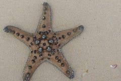 Natural semblance - a starfish Stock Images