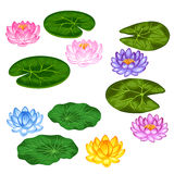 Natural set of stylized lotus flowers and leaves. Objects for decoration, design on advertising booklets, banners Stock Images
