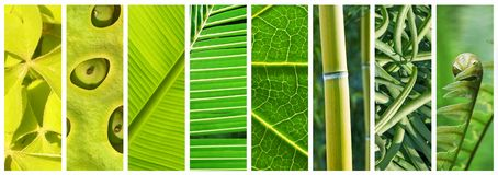 Natural Shades of green panoramic collage, green in nature concept royalty free stock image