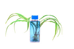 Natural shampoo bottle Royalty Free Stock Photo