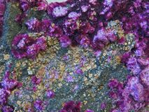 Free Natural Shapes. Minerals And Semi-precious Stones Textures And Backgrounds Stock Photography - 110808822