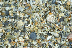 Natural shells background Royalty Free Stock Photos