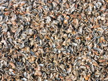 Natural shells pattern Stock Image