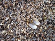 Natural shells pattern Stock Image