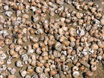 Natural shells pattern Royalty Free Stock Photos