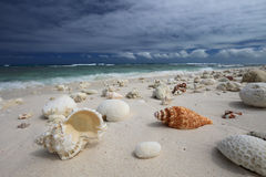 Natural shells and corals on the tropical beach Royalty Free Stock Photos