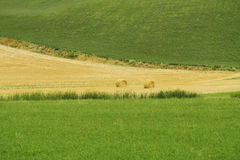 Haystacks in the countryside Royalty Free Stock Photos
