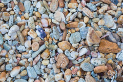Natural small rock background texture on the beach Royalty Free Stock Image