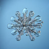 Natural snowflake macro naturals Royalty Free Stock Photos