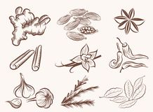 Natural spices. Set of vector sketches on a white background Stock Photo