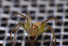 Natural spider in house in ayutthaya Stock Photos