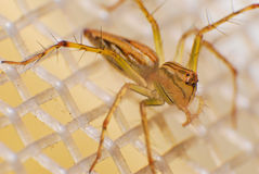 Natural spider in house in ayutthaya Stock Images
