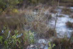 Natural spider net close up in the wild forest in the morning royalty free stock photography