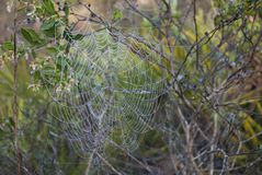 Natural spider net close up in the wild forest in the morning stock images