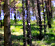 Natural spiderweb. Nature creates amazing things. The correct geometry of the spiderweb is simply amazing Royalty Free Stock Photo