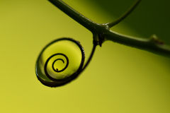 Natural spiral Royalty Free Stock Photos