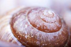 Natural spiral shell macro closeup Stock Images
