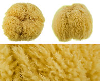 Natural sponge. On a white background with macro surface stock images