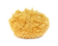 Natural sponge Royalty Free Stock Photos