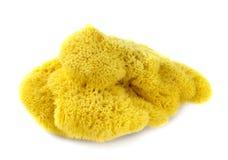 Natural sponge Stock Photos
