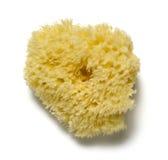 Natural sponge Stock Image