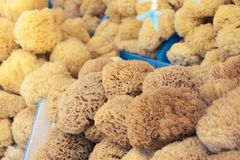 Natural sponge in different shapes on boat stall in Greece stock images