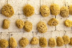 Natural sponge in different shapes on boat stall in Greece Royalty Free Stock Photography