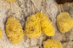 Natural sponge in different shapes on boat stall in Greece Stock Image