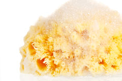 Natural sponge with foam Royalty Free Stock Photo