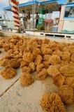 Natural Sponge Harvest Royalty Free Stock Photos