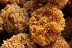 Natural Sponge Royalty Free Stock Image