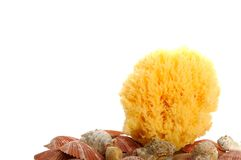 Natural sponge with seashells. Isolated on white background Royalty Free Stock Photography
