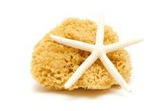Natural sponge and starfish royalty free stock photo