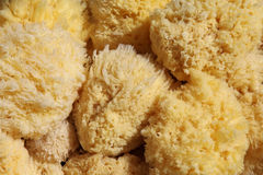 Natural sponges Stock Image