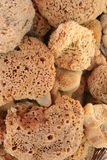 Natural sponges Royalty Free Stock Photos