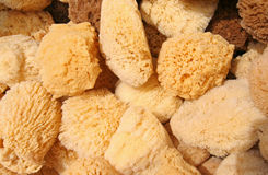Natural Sponges Royalty Free Stock Photography