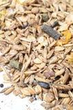Natural sportive  muesli based oats. for horse.macro Royalty Free Stock Image