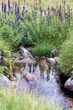 Natural spring Stock Images