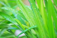 Natural spring background Royalty Free Stock Image