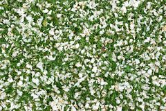 Natural spring background made of flowers petals and green grass royalty free stock image