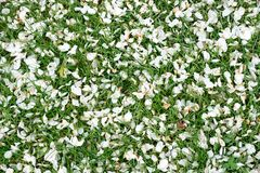 Natural spring background made of flowers petals and green grass stock photo