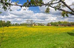 Natural spring frame in Sweden Stock Photography