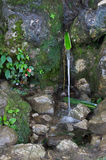 Natural spring. Naturally fitted spring, greenery setting Stock Photography