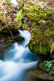 Natural spring with tree with moss Stock Photo