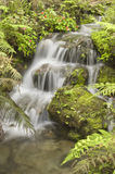 Natural Spring Waterfall Royalty Free Stock Photography