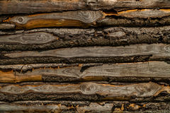 Natural spruce on wooden hut, detail Stock Photography