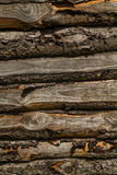 Natural spruce on wooden hut, detail Stock Photos